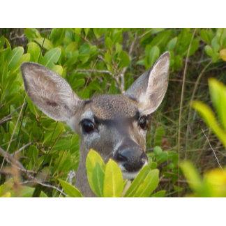 Deer Lovers Gifts