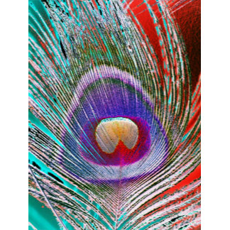 Peacock Feather 3