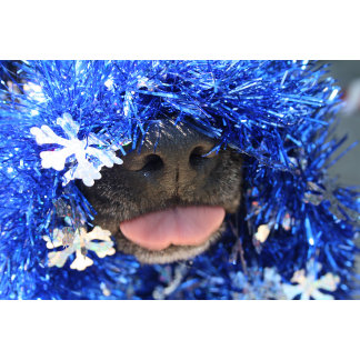 Black dog nose tongue out blue tinsel