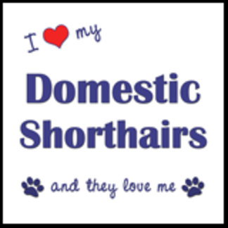 I Love My Domestic Shorthairs (Multiple Cats)
