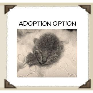 Adoption Option