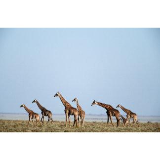 Etosha National Park, Namibia 2