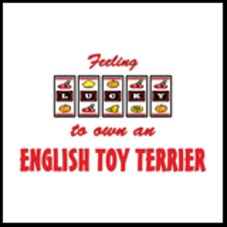 Feeling Lucky to Own an English Toy Terrier