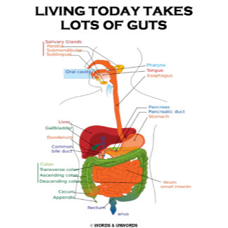 Living Today Takes Lots Of Guts (Digestive System)