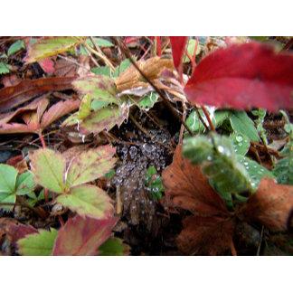 Leaf Images