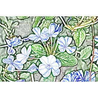 blue flowers on green sketch plumbago plant