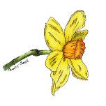 Daffodil-Zazzle.jpg
