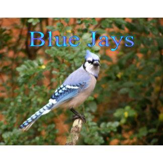 Blue Jay 12 Month Calendar 2015