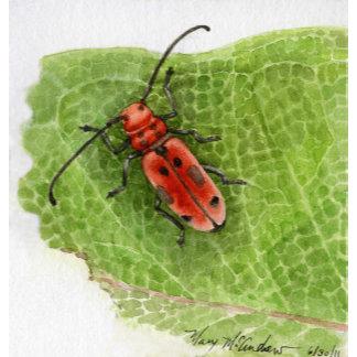 Bees / Beetles / Bugs