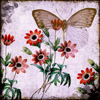 Anemones Butterfly