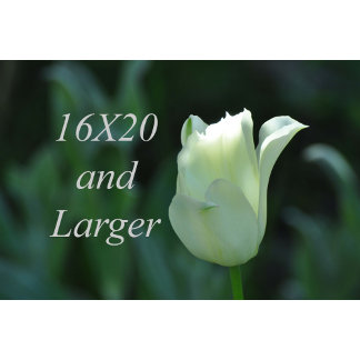 16X20 Photographs and Larger
