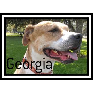 Georgia The Rescue Pitbull