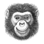 ChimpanzeeNEW.png