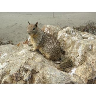 Seaside Squirrel