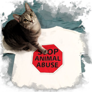 Kitten with a cause - Stop Animal Abuse