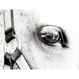 The Horses Soul