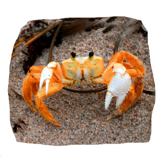 Fiddler Crab On Beach Colorized Orange