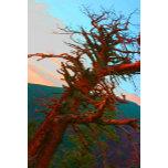 creeepy tree color.jpg