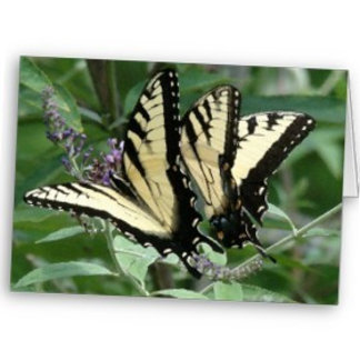 Butterflies, Beetles, Bumblebees