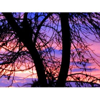 Sunset Tree 3