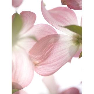 """dogwood blossoms poster print"""