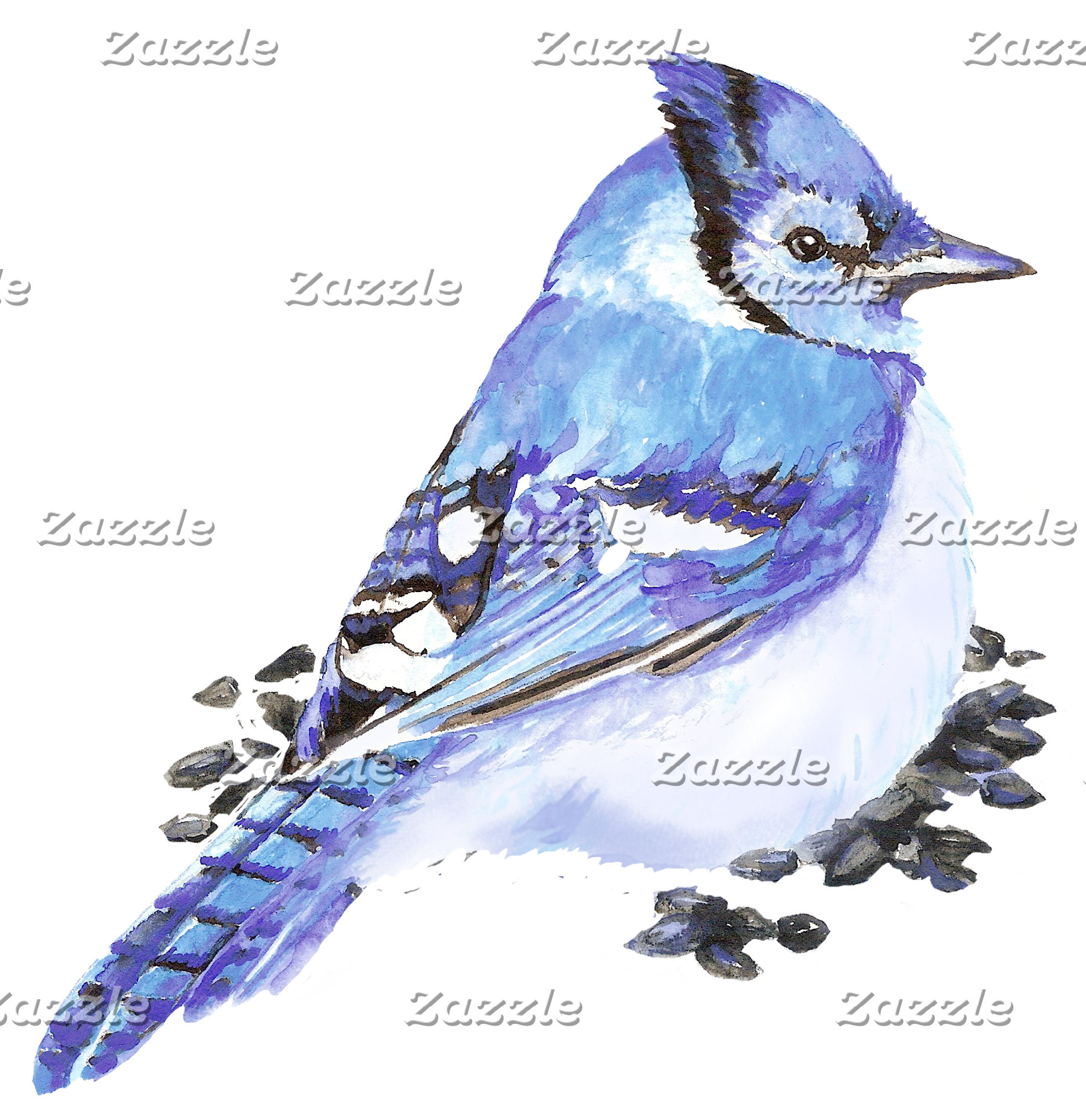 Blue Jay Stellar Jay Grey Jays