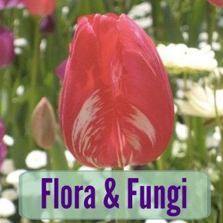 Flora & Fungi