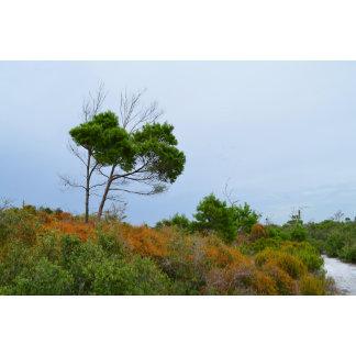 Florida scrub land trees