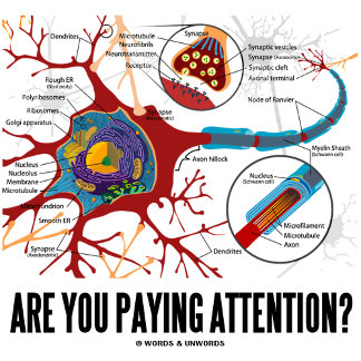 Are You Paying Attention? (Neuron / Synapse)