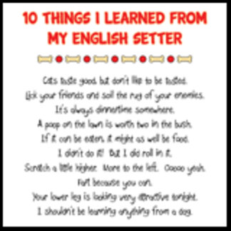 10 Things I Learned From My English Setter Joke