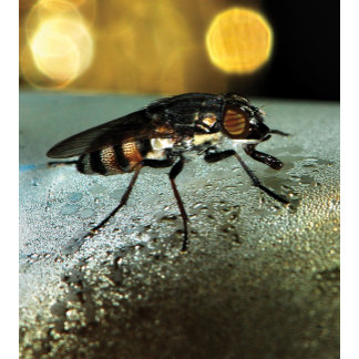 > INSECTS < Macro photography entomology