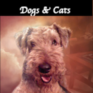 Dogs - Cats
