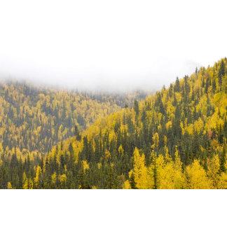 Forested hills, Alaska, USA