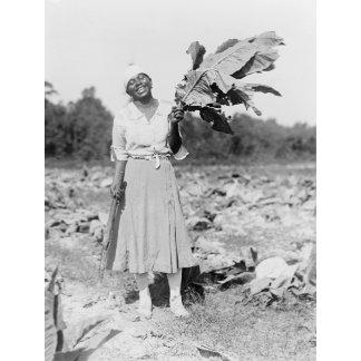 Black Woman Holding Tobacco Leaf