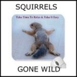Squirrels Gone Wild