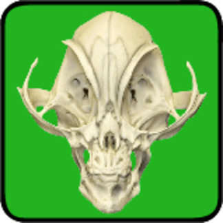 Realistic Alien Skull