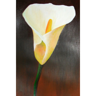 Cream Calla Lily