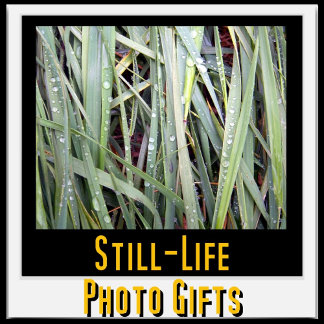 Still-Life Photo Gifts