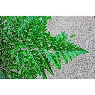 fern sideways sketch plant
