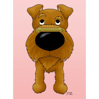 Irish Terrier - Big Nose Valentine