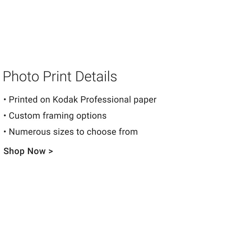 Photo Print Details - Printed on Kodak Professional paper. Custom framing options. Numerous sizes to choose from.