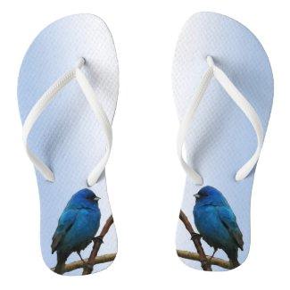 Indigo Buntings Flip Flops