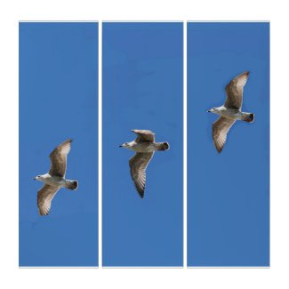 Gull Triptych