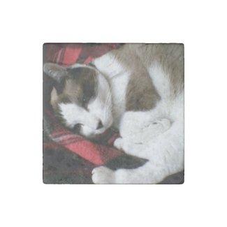 snowshoe tartan kitty stone magnet