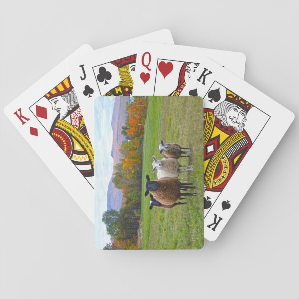 Vermont Sheep in Autumn Playing Cards
