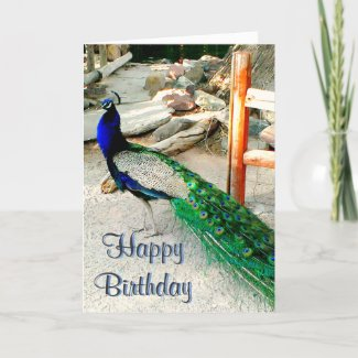 Birthday Card - Peacock Design, envelope included