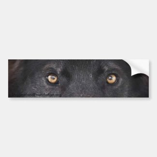 Black Wolf Eyes Bumper Sticker