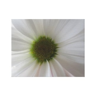 White Flower Petal Photo Canvas Print