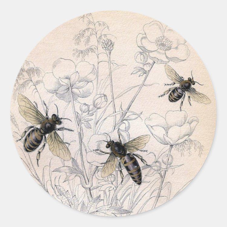 Vintage Honey Bee Art Print Classic Round Sticker