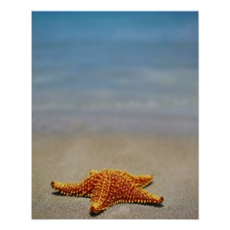 The Starfish Story - making a difference